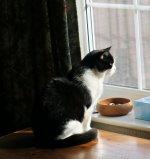 43-Freddie, window - 17-03-2021.jpg