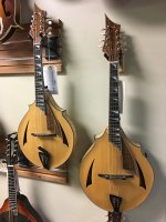 Mandolin & mandola.jpg